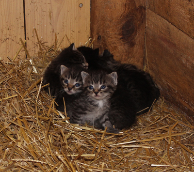 Newborn Kittens at Morden's