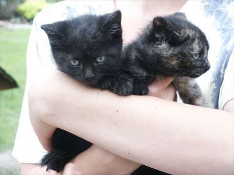 Kittens Thing1 and Thing2